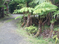 Hawaii hostels do not typically have rainforest driveways